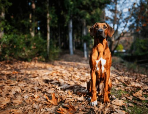 Quels sites d'exception du Languedoc visiter avec son chien ? Notre sélection.