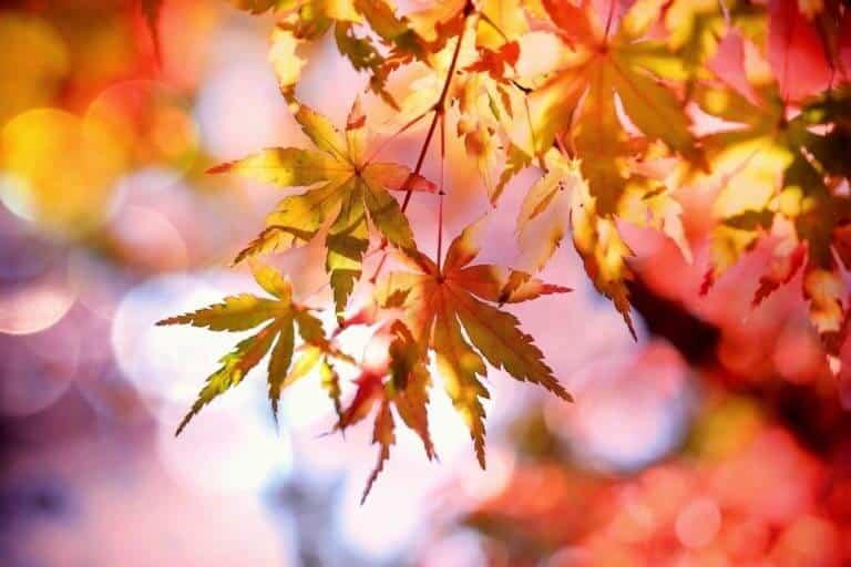 Atelier d'automne - Bambouseraie des Cévennes